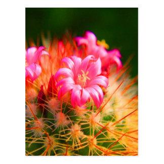 Flor pegajosa del cactus de los cactus de la belle tarjeta postal
