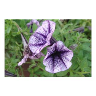 Flor Impresion Fotografica