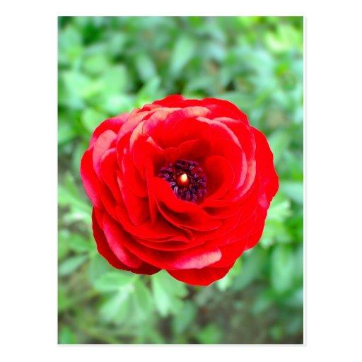 flor postal