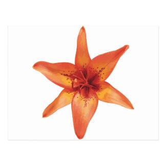 flor postcard