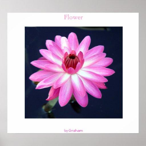 Flor Póster