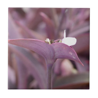 Flor principal del mexicano tres violetas azulejos ceramicos