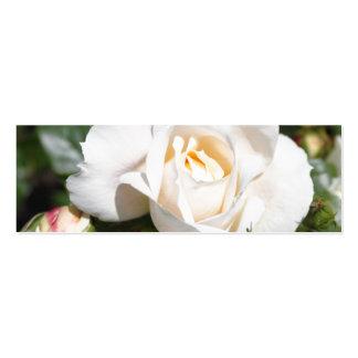 flor pura bonita del rosa blanco. foto floral Art. Plantilla De Tarjeta De Negocio