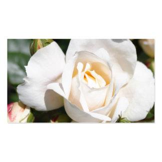 flor pura bonita del rosa blanco. foto floral Art. Plantilla De Tarjeta Personal