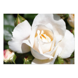 flor pura bonita del rosa blanco. foto floral Art. Tarjetas De Negocios