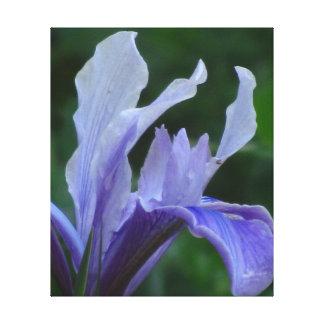 Flor púrpura azul del iris impresiones en lona