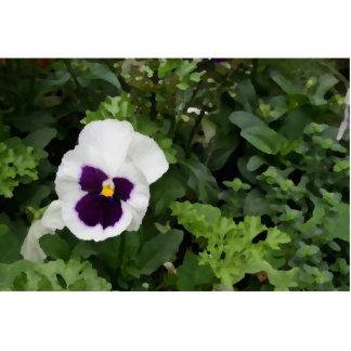flor púrpura blanca del pensamiento contra verde esculturas fotograficas