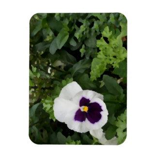 flor púrpura blanca del pensamiento contra verde iman de vinilo