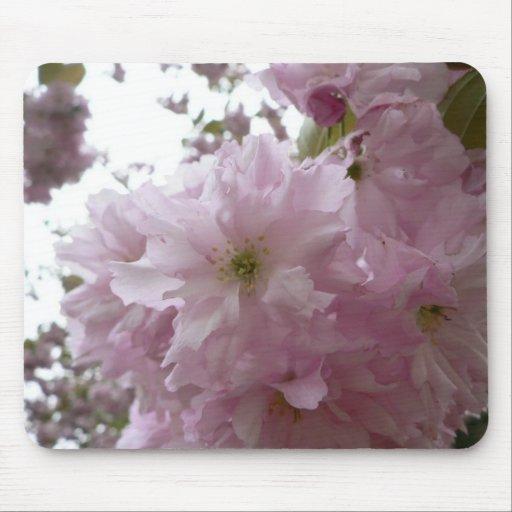 Flor púrpura brillante del árbol floreciente en ár alfombrillas de ratón