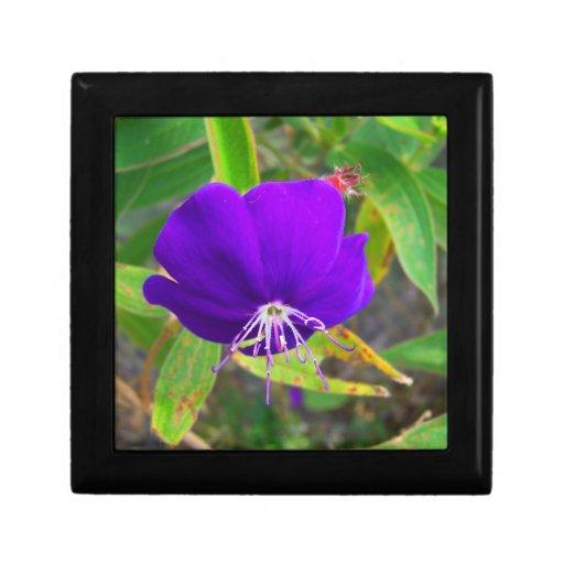 flor púrpura contra diseño de instalaciones verde caja de joyas