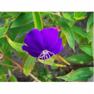 flor púrpura contra diseño de instalaciones verde escultura fotografica