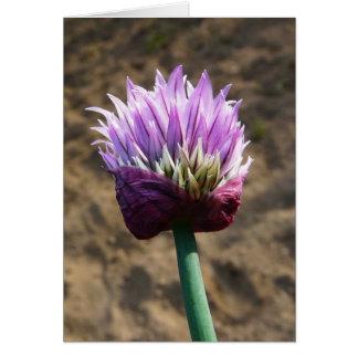 Flor púrpura de la cebolleta en la floración tarjeta de felicitación