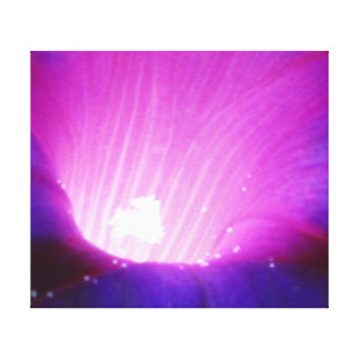 Flor púrpura de la correhuela impresión de lienzo