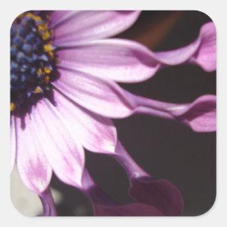 Flor púrpura de la cuchara pegatina cuadrada
