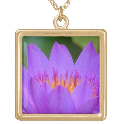 Flor púrpura de la flor del lirio de agua grimpola