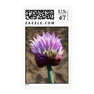 Flor púrpura de la hierba de la cebolleta estampilla