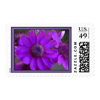 Flor púrpura de la margarita sellos