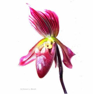 Flor púrpura de la orquídea de deslizador contra l escultura fotográfica