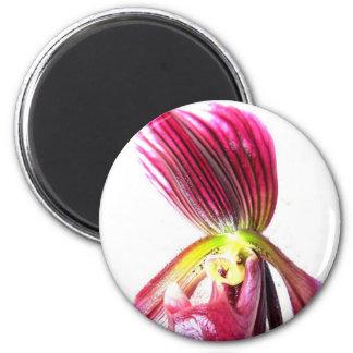 Flor púrpura de la orquídea de deslizador contra l imán de nevera