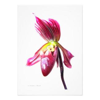 Flor púrpura de la orquídea de deslizador contra l invitacion personal