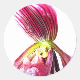 Flor púrpura de la orquídea de deslizador contra l etiqueta