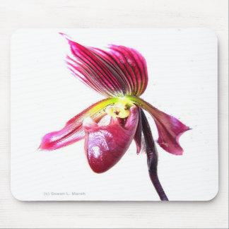 Flor púrpura de la orquídea de deslizador contra l tapetes de raton