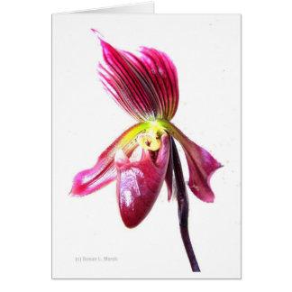 Flor púrpura de la orquídea de deslizador contra l felicitación