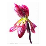 Flor púrpura de la orquídea de deslizador contra l postal