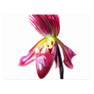 Flor púrpura de la orquídea de deslizador contra l tarjeta postal