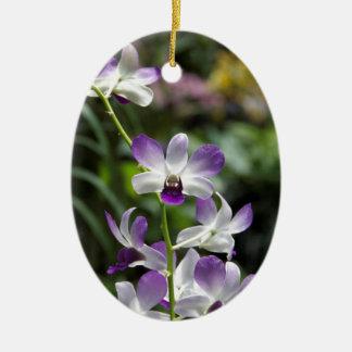 Flor púrpura de la orquídea en jardín nacional de  ornamento de navidad