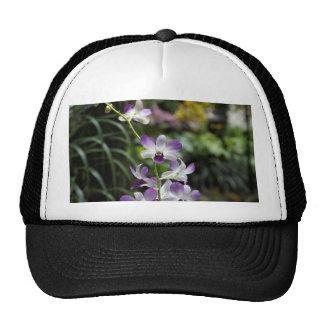 Flor púrpura de la orquídea en jardín nacional de