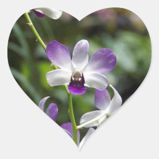 Flor púrpura de la orquídea en jardín nacional de calcomanías de corazones
