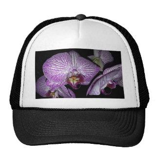 Flor púrpura de la orquídea