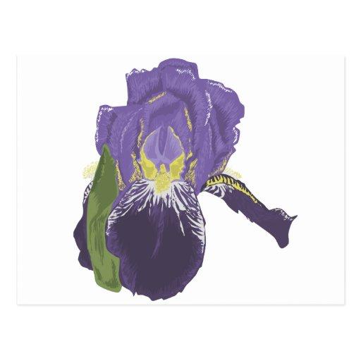 Flor púrpura de la orquídea postales