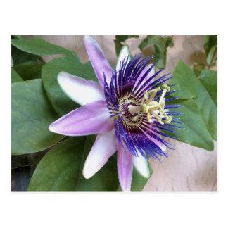 Flor púrpura de la pasión tarjeta postal