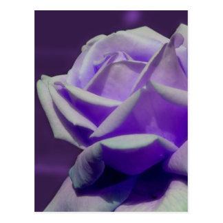 Flor púrpura de los pétalos del capullo de rosa tarjeta postal