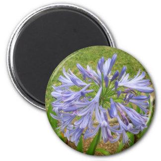 Flor púrpura de Maui Imanes