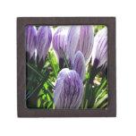 Flor púrpura del azafrán