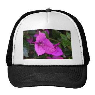 Flor púrpura del Bougainvillea en la floración Gorro