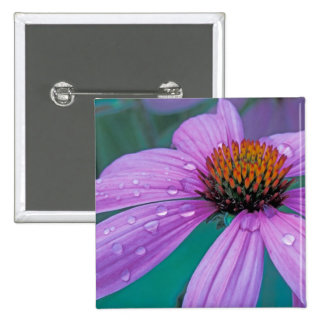Flor púrpura del cono con descensos del agua pins