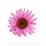 Flor púrpura del cono tarjeta postal