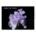 Flor púrpura del iris en fondo negro tarjetas