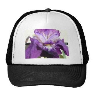 flor, púrpura del iris gorros bordados
