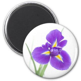 flor púrpura del iris imán redondo 5 cm