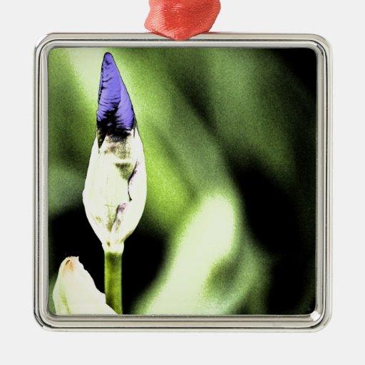 Flor púrpura del iris ornamentos de reyes