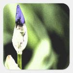 Flor púrpura del iris pegatinas cuadradas