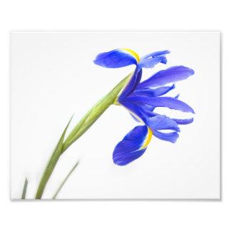 Flor púrpura del iris arte fotografico