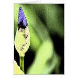 Flor púrpura del iris tarjetas