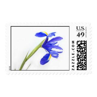 Flor púrpura del iris timbre postal