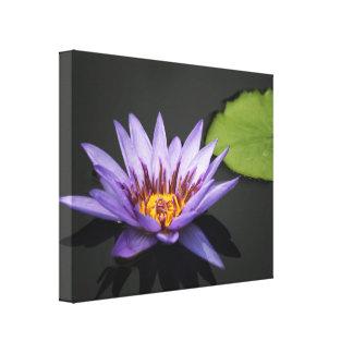 Flor púrpura del lirio de agua impresion en lona